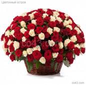 Корзина 101 красно-белая роза