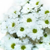 Хризантема кустовая Бакарди, белая